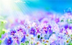 «Я-садовником-родился»