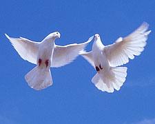 Егорка и голуби