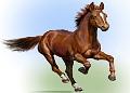 Доктор лошадь