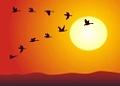 Зачем улетают птицы?